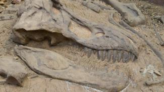 Fosil dinosaurus.