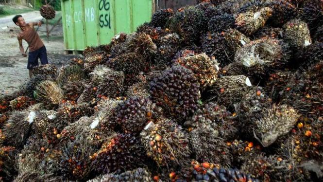 Buruh memuat tandan buah segar (TBS) kelapa sawit di areal perkebunan sawit