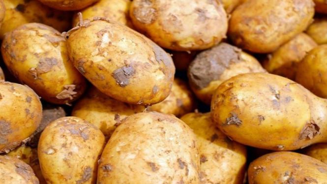 Ilustrasi kentang.