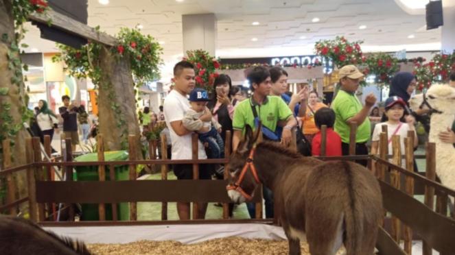 Keledai mini asal Amerika Selatan di Tangerang City Mall