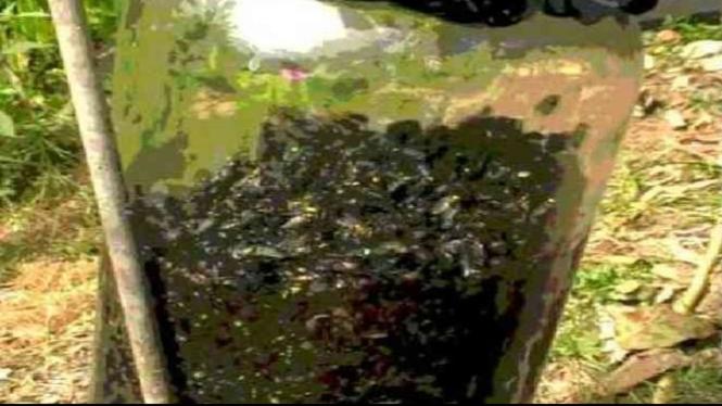 Ribuan lalat terperngkap dalam botol.