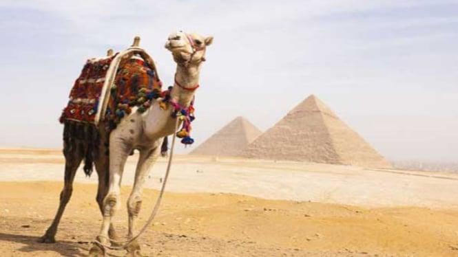 Piramida Giza, Mesir.
