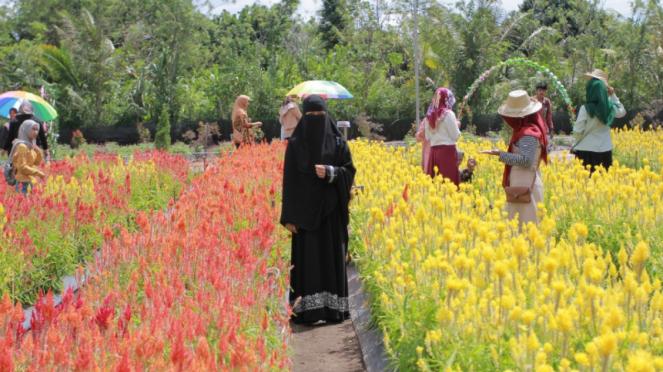 Taman Bunga Celosia Garden di Aceh Jaya.