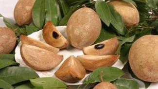 Ilustrasi buah sawo.