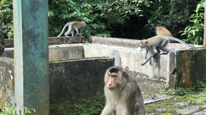 Monkey Forest Sibaganding