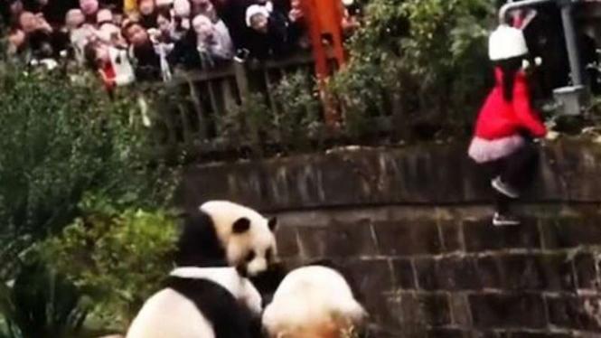 Penyelamatan bocah di kandang panda