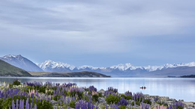 Danau Tekapo, Selandia Baru.