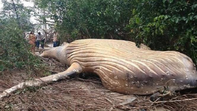 Bangkai paus di hutan Amazon.