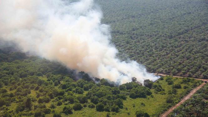 Kebakaran hutan dan lahan.
