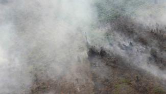 Kebakaran hutan dan lahan melanda perkebunan sawit rakyat di sejumlah titik di Desa Bukit Kerikil Bengkalis dan Desa Gurun Panjang di Dumai, Dumai Riau, Senin, 25 Februari 2019.