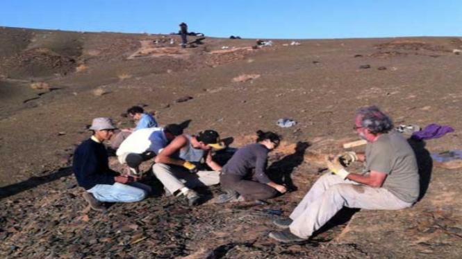 Tim peneliti menggali fosil dari Formasi Fezouata di Maroko.