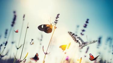 https://thumb.viva.co.id/media/frontend/thumbs3/2019/03/08/5c81a3a7404a6-mengapa-jumlah-kecoa-dan-lalat-meningkat-dibanding-lebah-dan-kupu-kupu_375_211.jpg