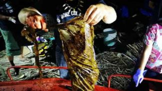 Sampah plastik di perut ikan paus.