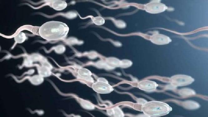Ilustrasi sperma.