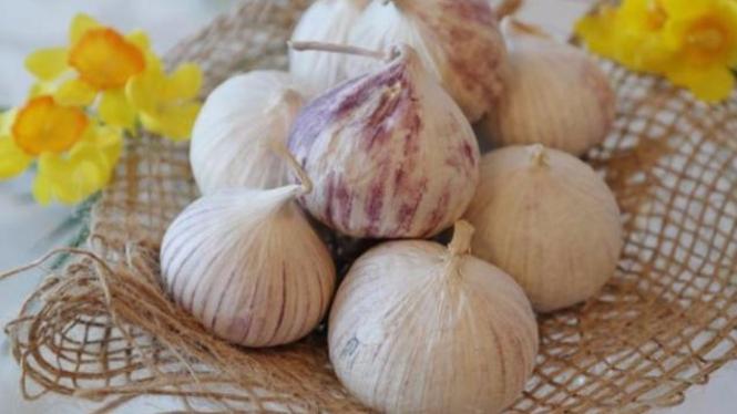 Ilustrasi bawang putih tunggal