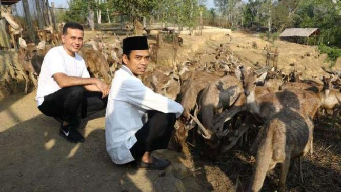 Ustaz Abdul Somad bersama Wakil Gubernur Sumut, Musa Rajekshah, saat memberi makan rusa.