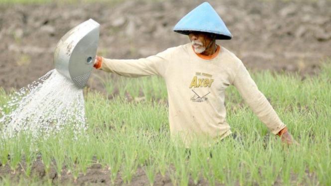 Ilustrasi petani -  Kartu Tani untuk membeli pupuk bersubsidi.