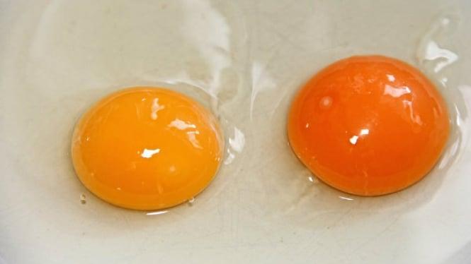 Ilustrasi kuning telur.