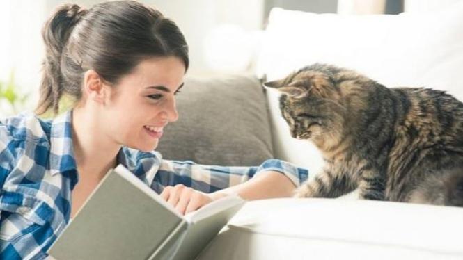 Gambar Ilustrasi Tema Hewan Kesayangan Kucing Bisakah Hewan Peliharaan Tulari Corona Covid 19 Ini Faktanya
