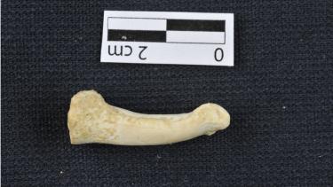 https://thumb.viva.co.id/media/frontend/thumbs3/2019/04/11/5caeb57e5ffcc-homo-luzonensis-spesies-manusia-baru-ditemukan-di-filipina_375_211.jpg