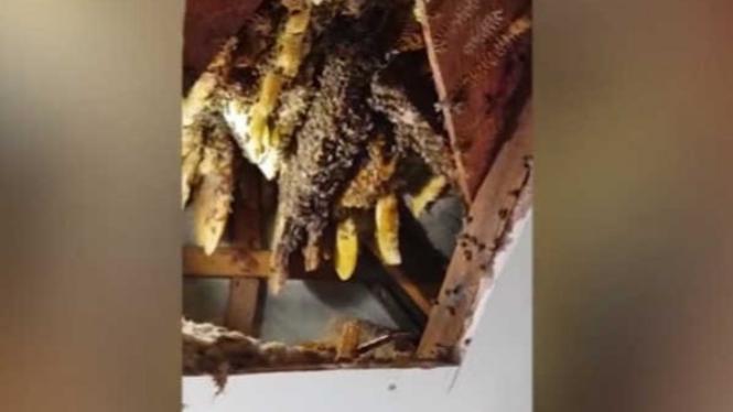 Sarang lebah raksasa.
