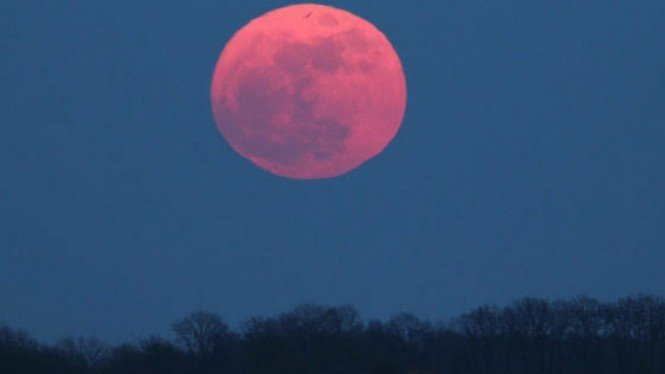 Ilustrasi Pink Moon