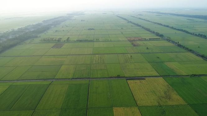 Ilustrasi lahan pertanian.