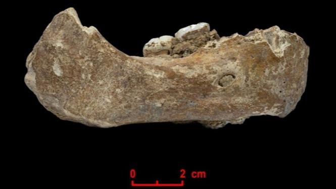 Tulang Rahang