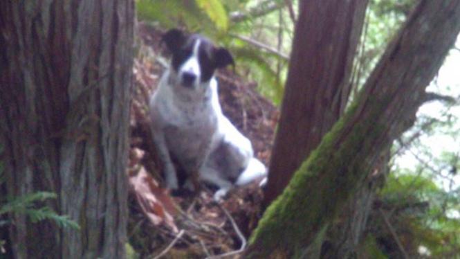 Anjing setia bernama Daisy.