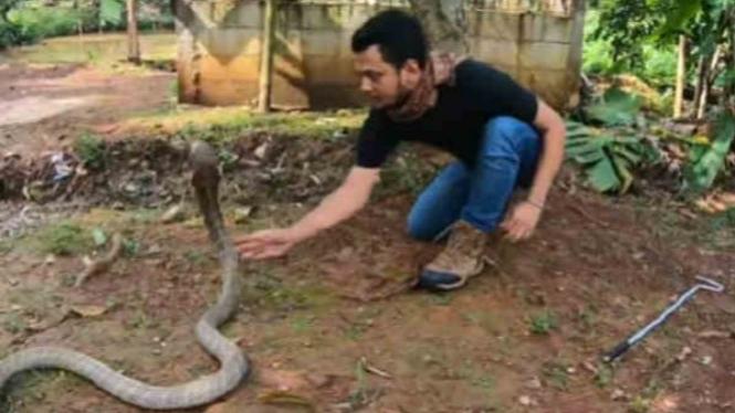 Panji pawang ular.