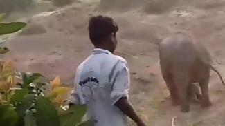 Pria diinjk gajah.