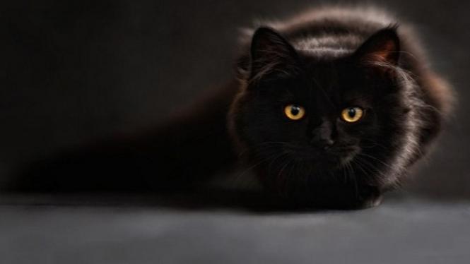 Kucing mati.