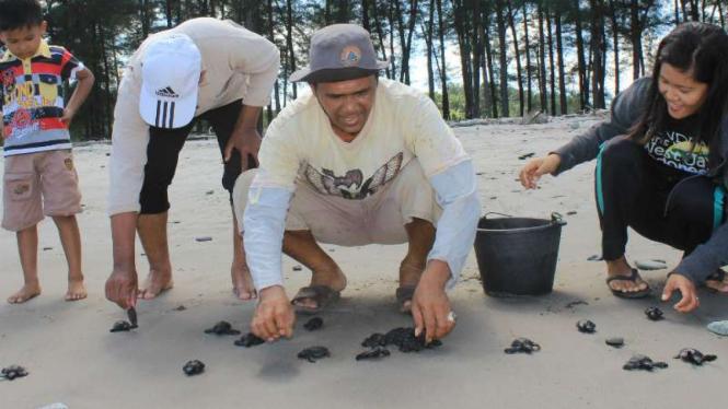 Pelepasan 100 ekor tukik di kawasan Pantai Batu Kumbang, Jambi
