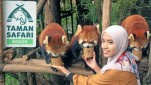 https://thumb.viva.co.id/media/frontend/thumbs3/2019/06/03/5cf4deb0726a8-memberi-makan-red-panda-di-taman-safari_151_85.jpg