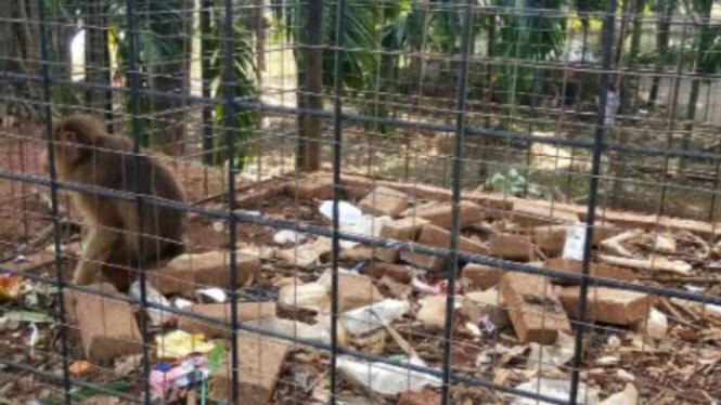 Kotornya Mini Zoo, Ini Penjelasan Kostrad Cilodong