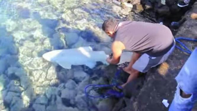Ikan Hiu Albino ditemukan warga di Ternate.