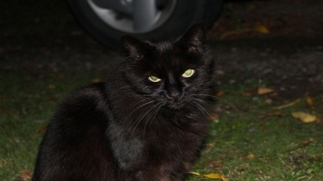 Ilustrasi kucing hitam.
