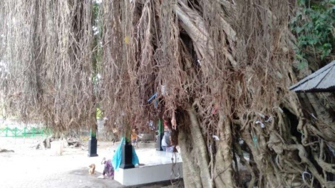 Pohon beringin di Loang Baloq Kota Mataram