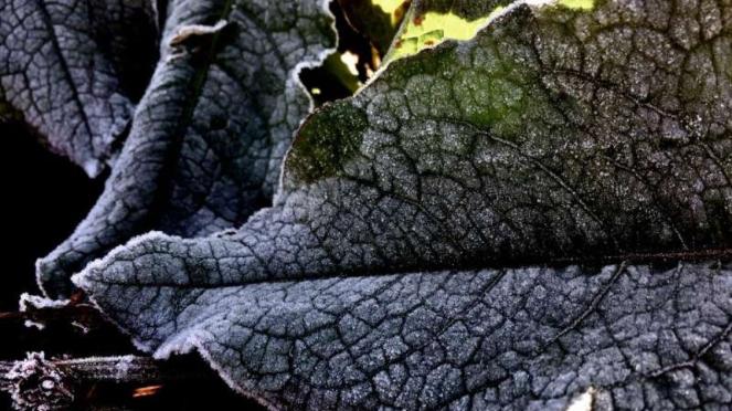 Fenomena frozen atau embun upas di Taman Nasional Bromo Tengger Semeru di Jawa T
