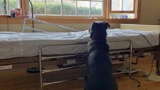 Anjing setia yang menunggu majikannya.