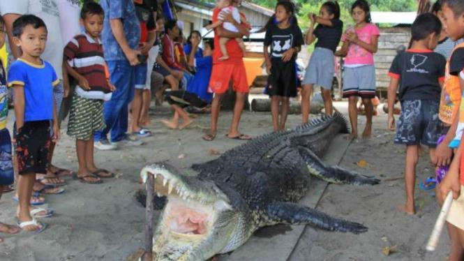 Seekor buaya muara sepanjang empat meter dibunuh oleh warga Kelurahan Payahe, Kecamatan Oba, Kota Tidore Kepulauan, Maluku Utara, Selasa, 25 Juni 2019.