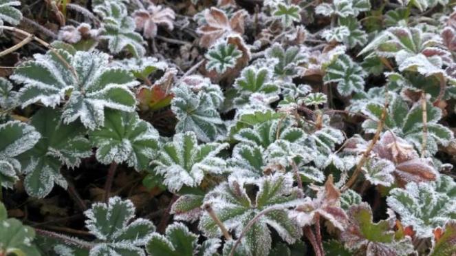Fenomena frost atau embun upas yang membeku menyerupai salju meluas di kawasan T