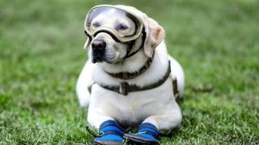 https://thumb.viva.co.id/media/frontend/thumbs3/2019/06/25/5d11e902e7c8c-anjing-penyelamat-tersohor-frida-pensiun-setelah-bertugas-sembilan-tahun_375_211.jpg