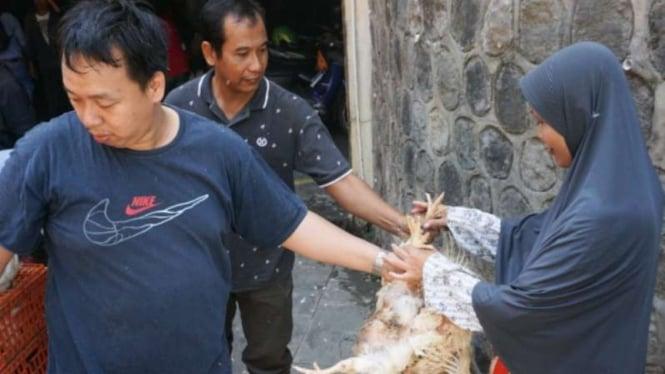 Peternak ayam membagikan ayam gratis sebagai bentuk protes.