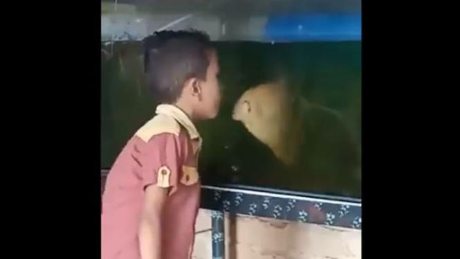 Bocah berbicara dengan ikan
