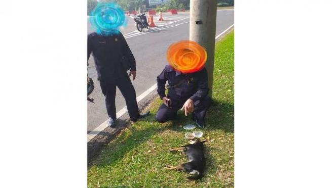 Anjing milik SM mati ditabrak kendaraan