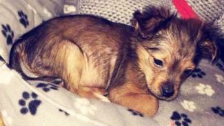 https://thumb.viva.co.id/media/frontend/thumbs3/2019/07/11/5d26fa23b7991-pria-yang-memukuli-anak-anjing-hingga-mati-dihukum-penjara_325_183.jpg