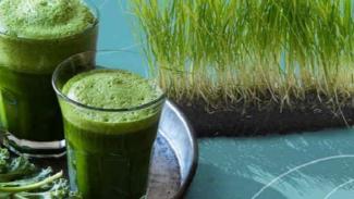 https://thumb.viva.co.id/media/frontend/thumbs3/2019/07/15/5d2c593c36c88-membuat-obat-asam-urat-kuat-dari-buah-nanas-dan-wheatgrass_325_183.jpg