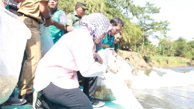 Pelepasan ikan nilem di Sungai Ciliwung