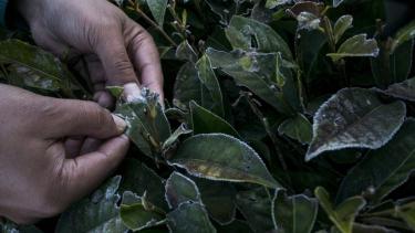 https://thumb.viva.co.id/media/frontend/thumbs3/2019/07/19/5d3103a0c375d-banyak-tanaman-rusak-akibat-suhu-dingin-ekstrem-petani-sebut-kemarau-tahun-ini-lebih-parah_375_211.jpg
